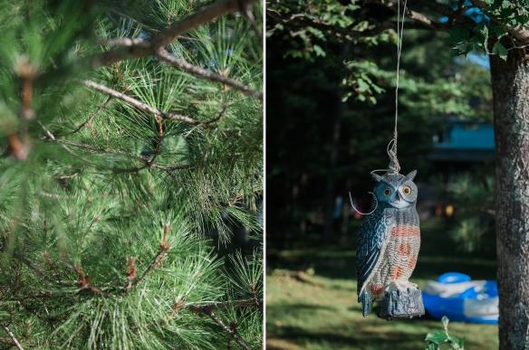 hanging-owl